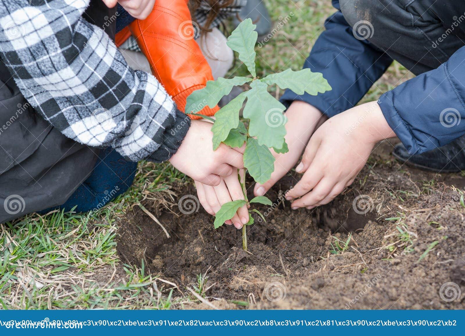 De kinderen planten bomen Kinderen geplante eiken landscaping Om een boom te planten