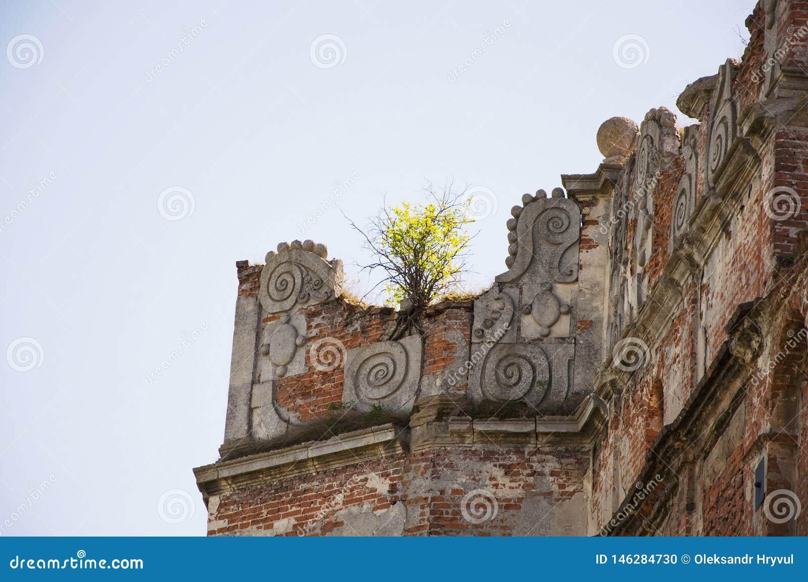 De kleine boom groeit op de ruïnes oud kasteel