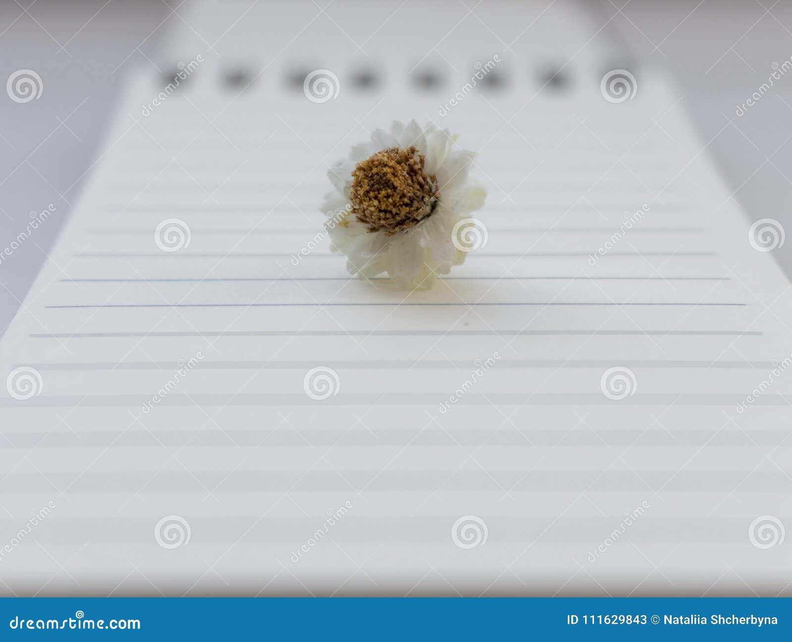 De kleine witte bloem van de kamillekamille op open notitieboekje met leeg blad unfocused achtergrond Het beginnen en het schrijv