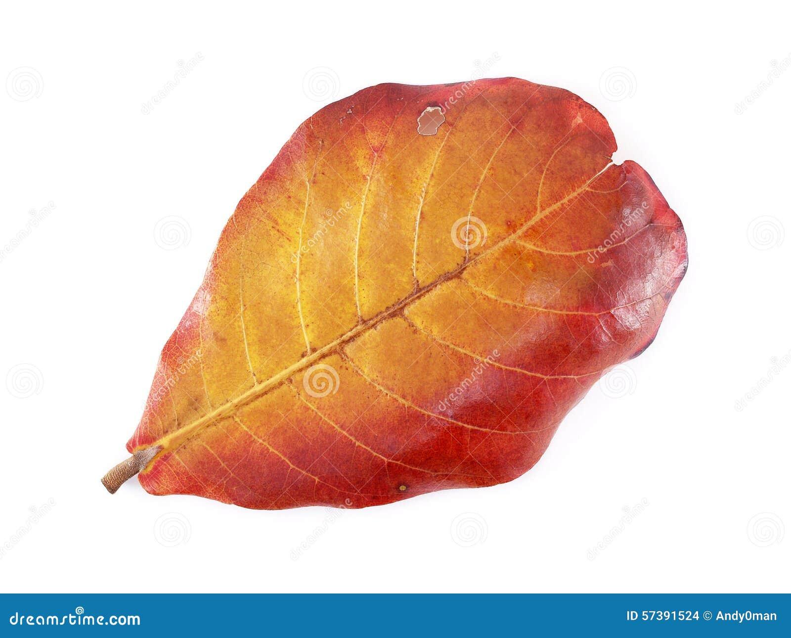De kleur van de bladerenverandering