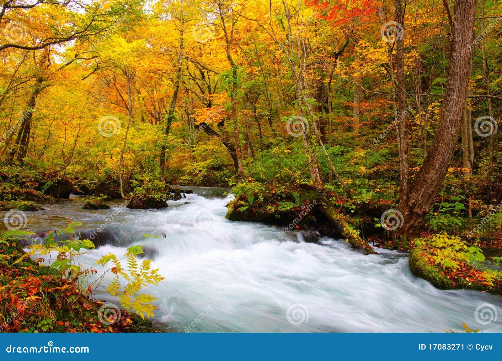 De Kleuren van de herfst van Rivier Oirase