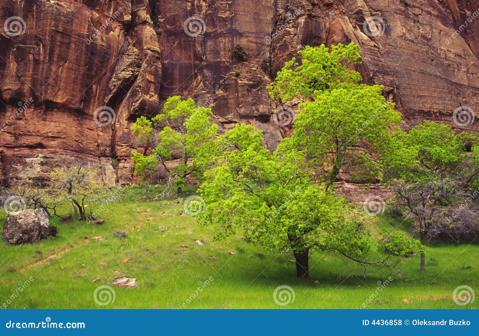 De kleuren van de lente in Canion Zion