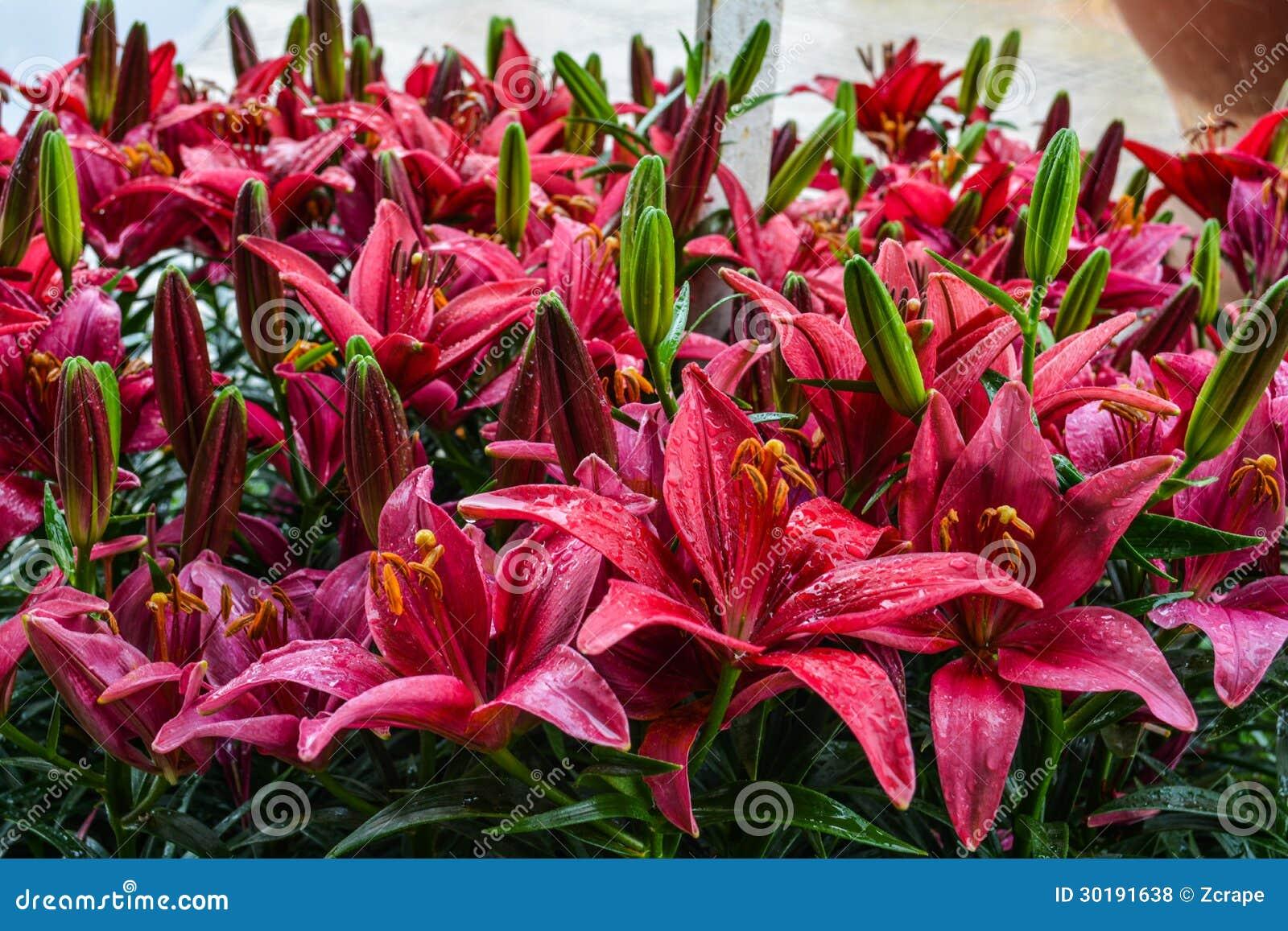 De tuinen van de bloem