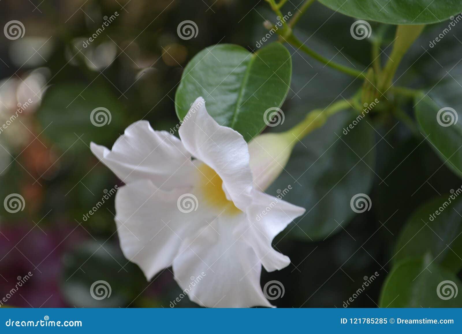 De kleurrijke roze witte purpere sinaasappel van het bloemenboeket