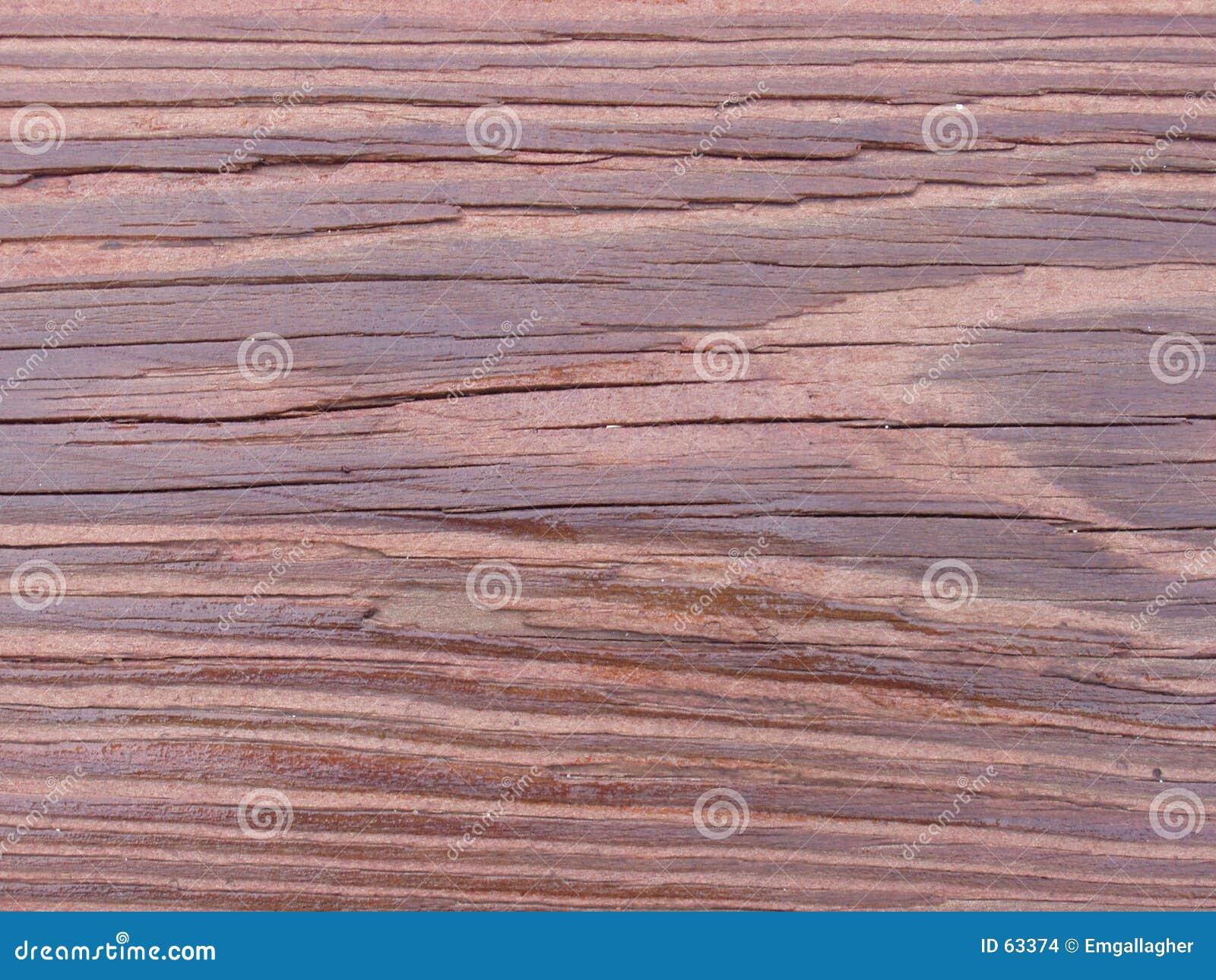De korrel van de Californische sequoia