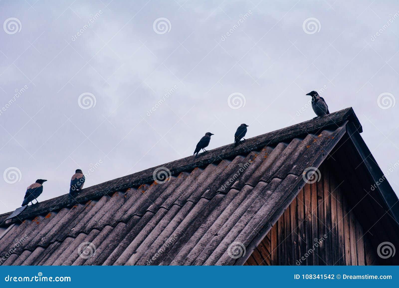 De kraaien zitten op het dak van het huis in bewolkt weer