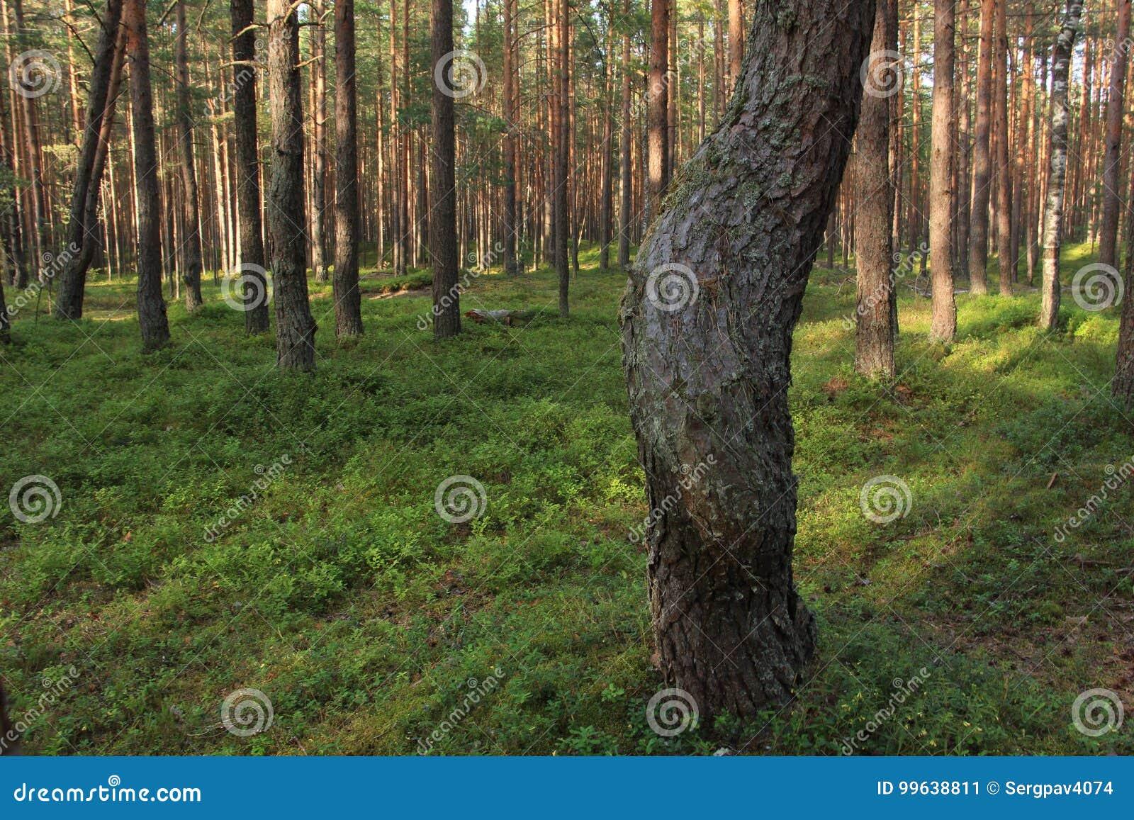 De kromme van een boomboomstam