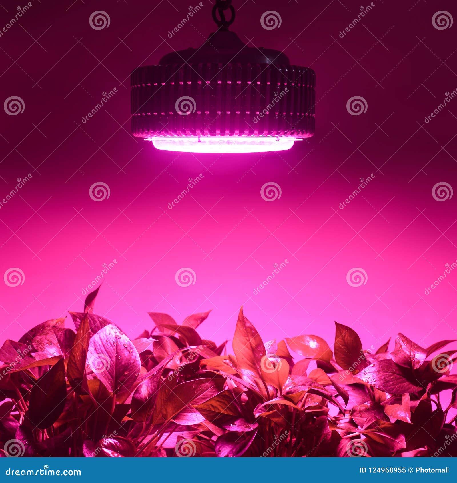 De kruiden groeien met het Geleide Licht van de installatiegroei in serre