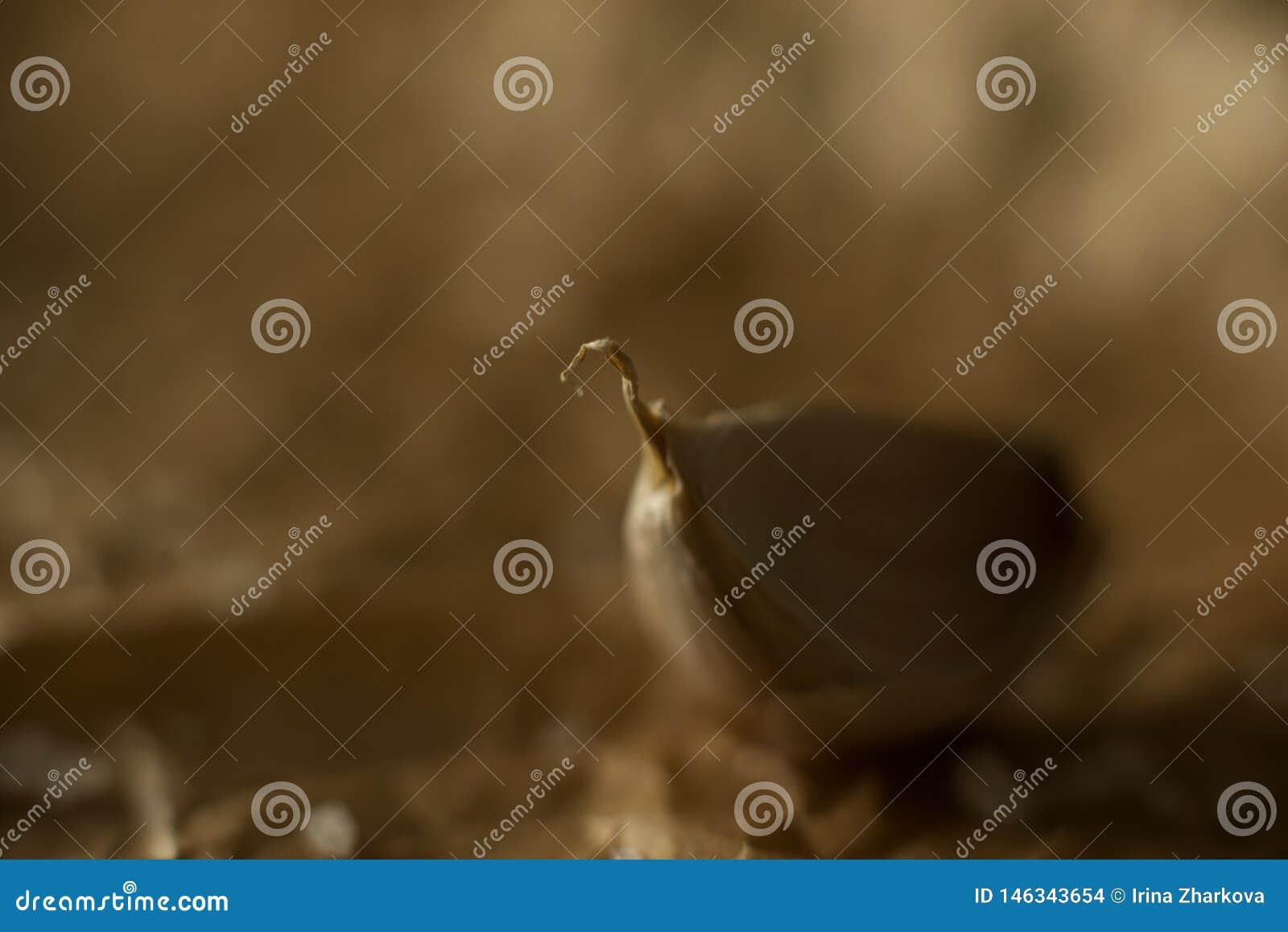 De kruidnagel van knoflook op een donkere achtergrond, macro schoot close-up, stilleven, selectieve nadruk, bokeh,