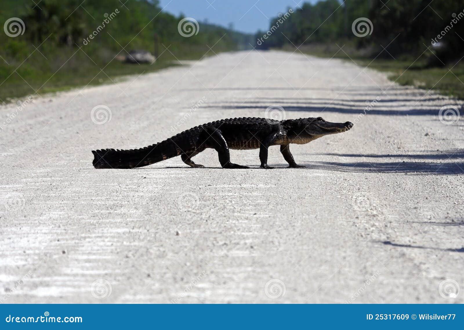 De Kruising van Gator