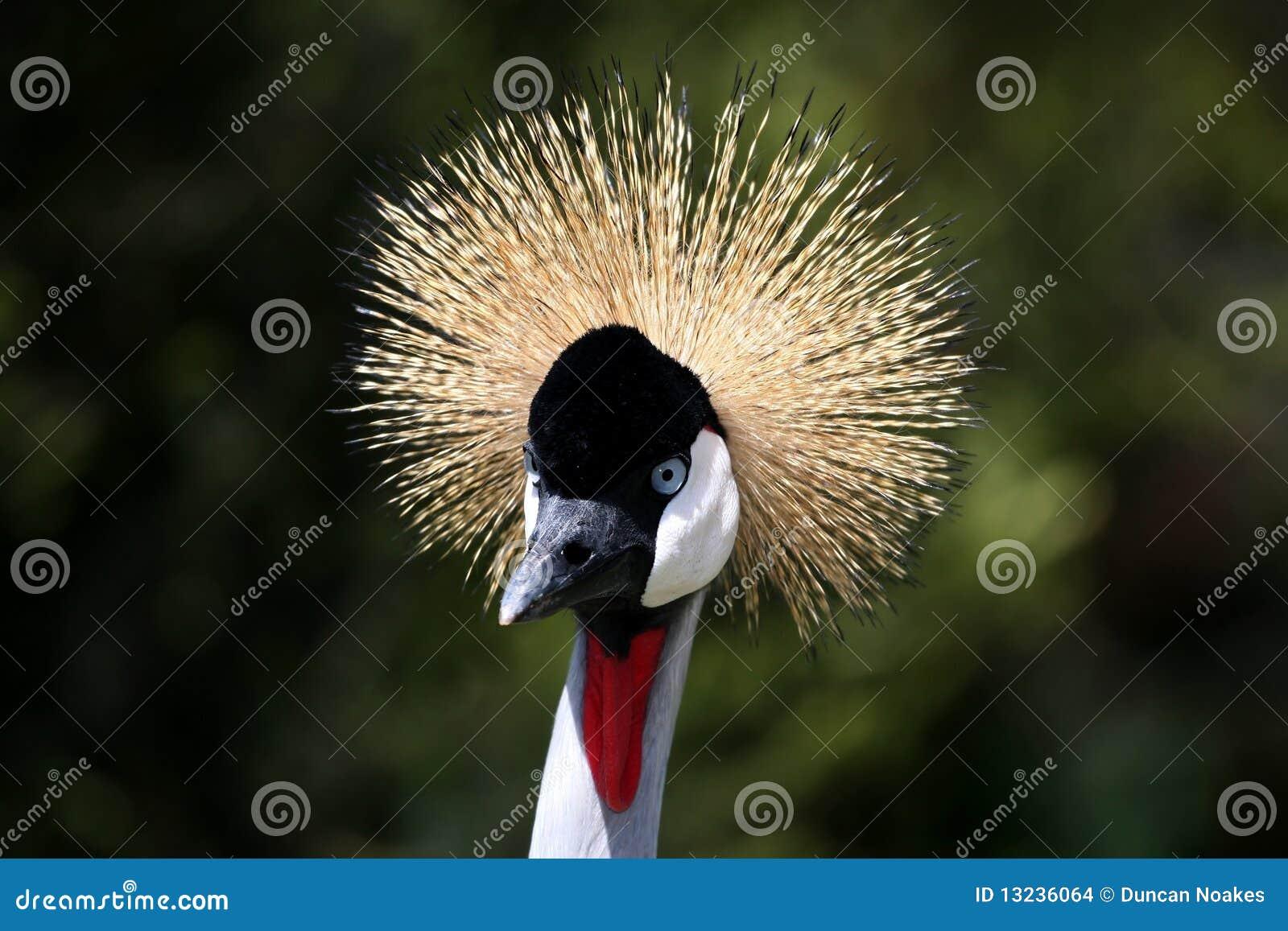 De kuif vogel van de kraan stock afbeeldingen afbeelding 13236064 - Vormgeving van de badkamer kraan ...