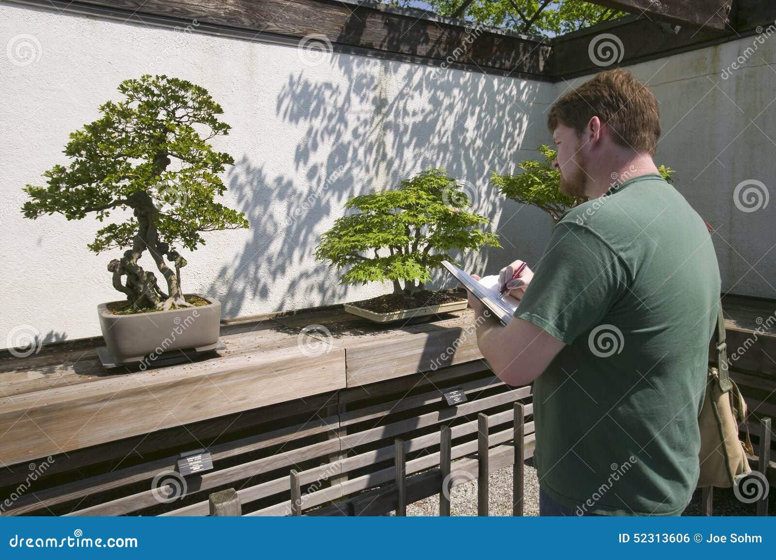 De kunstenaar trekt Japanse Bonsaiboom in Nationaal Arboretum, Washington D C