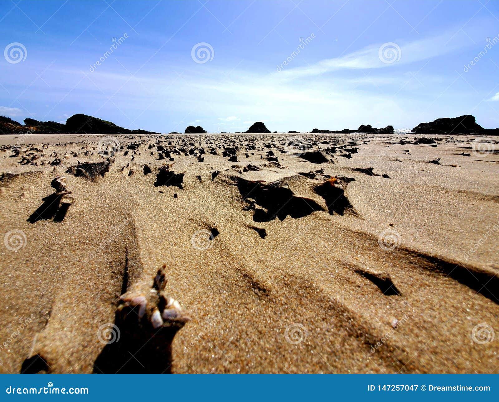 De kusthuis van Oregon van het wind geblazen zand