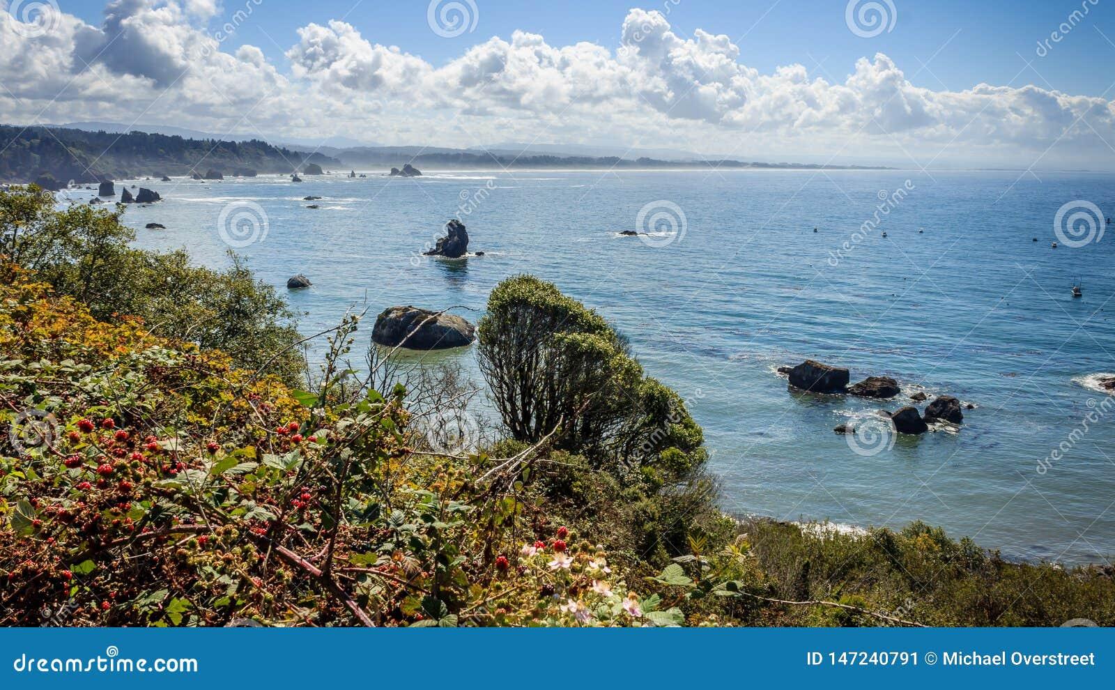 De kustscène van Trinidad