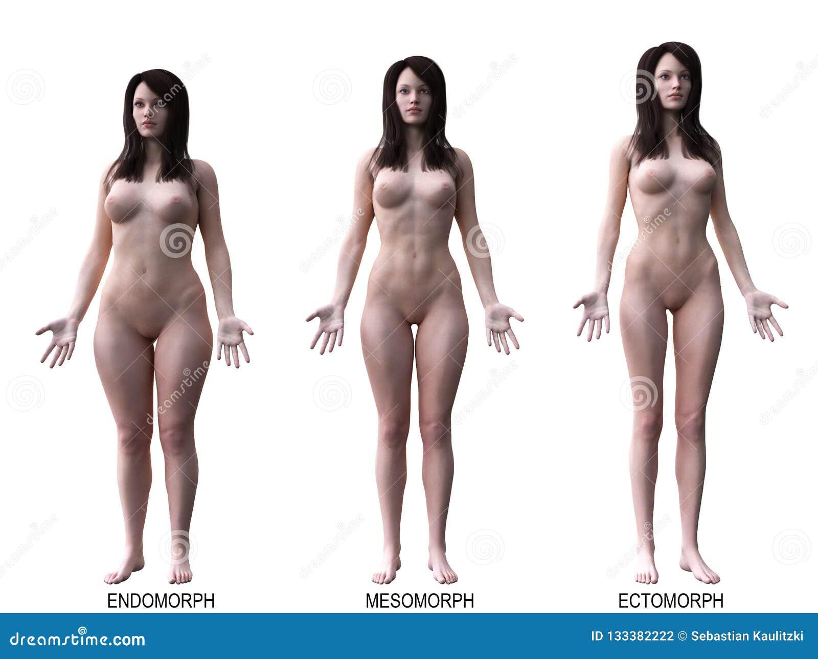 De kvinnliga kroppstyperna