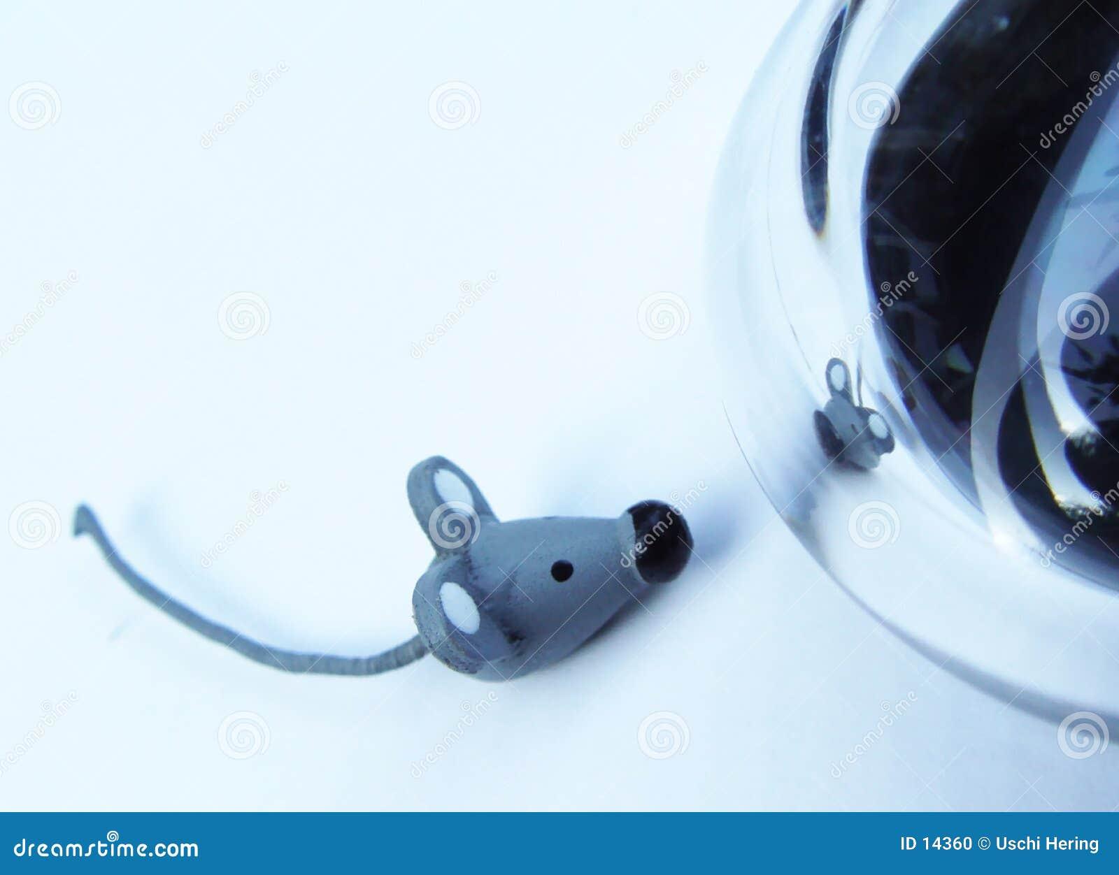 De la souris à la souris
