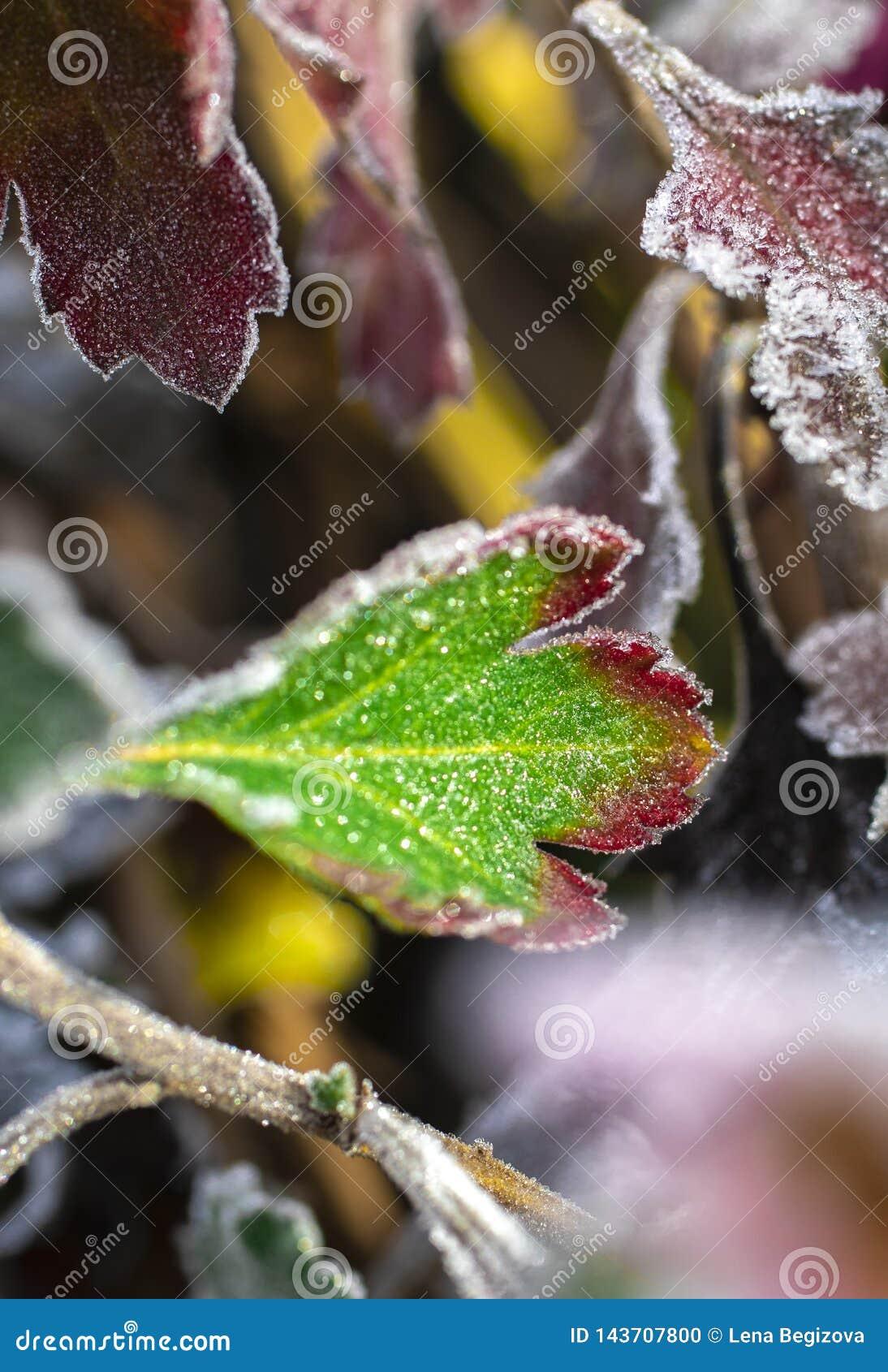 De laatste schoonheid van de ijzige Bloem