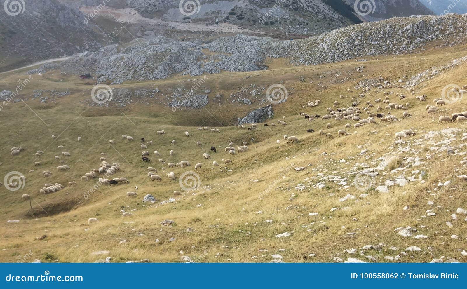 De Landbouw van Bosnië-Herzegovina/van de vrij-Waaier