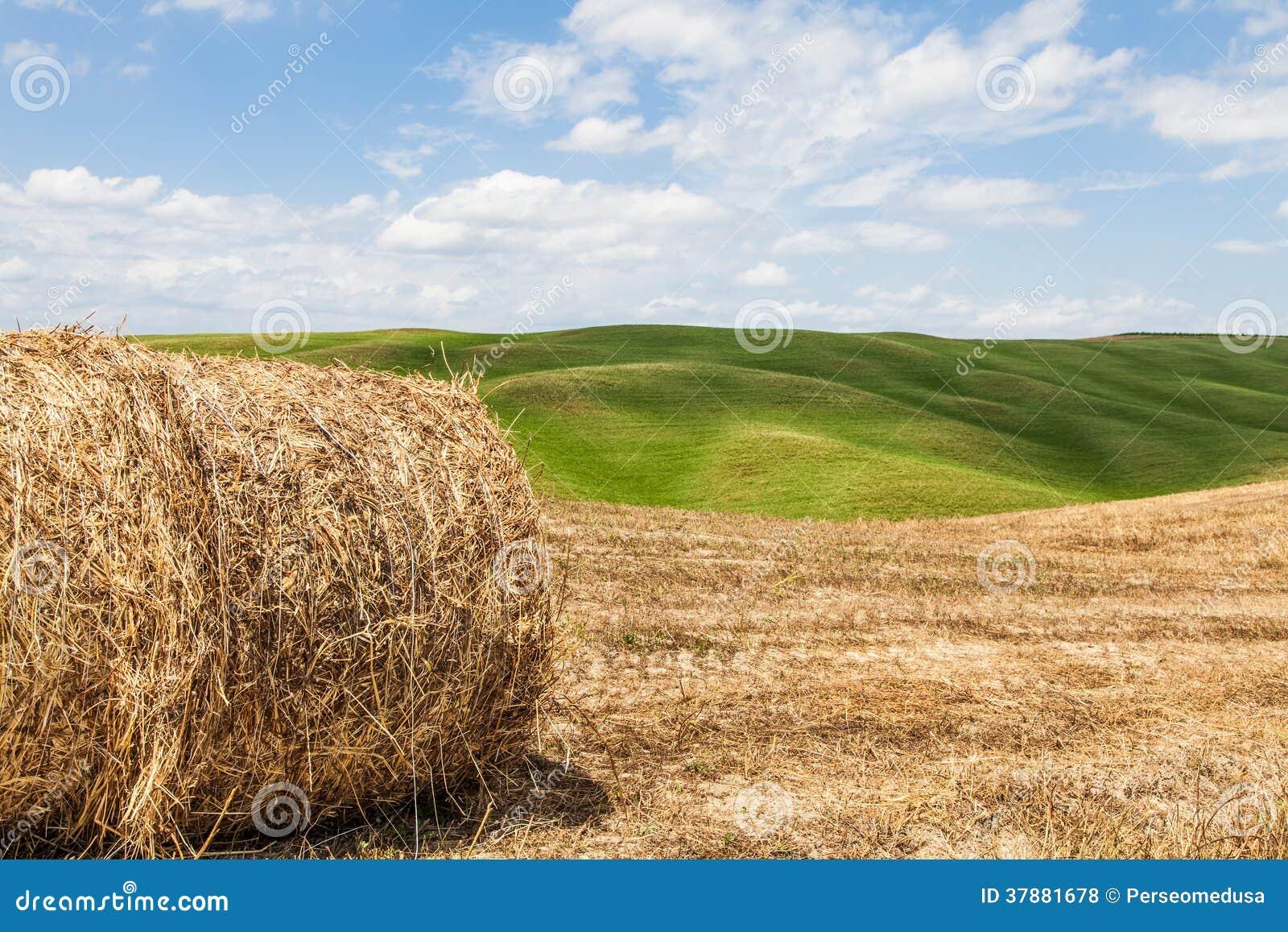 De landbouw van Toscanië