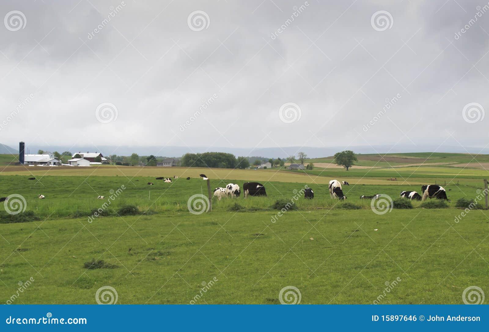 De landbouwbedrijven van Amish