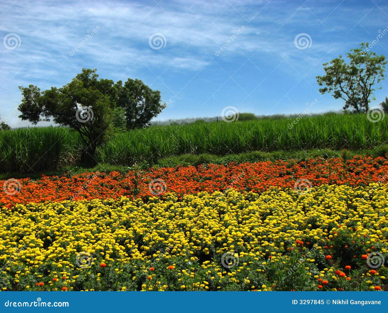 De Landbouwbedrijven van de bloem