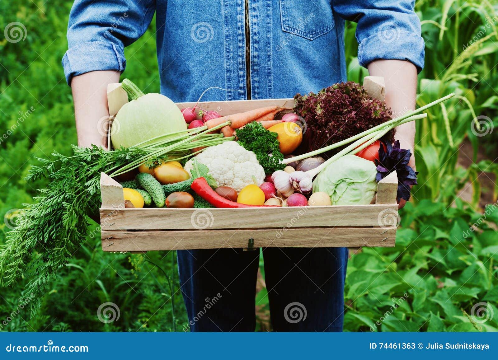 De landbouwer houdt in zijn handen een houten doos met een gewas van groenten en oogst van organische wortel op de achtergrond va