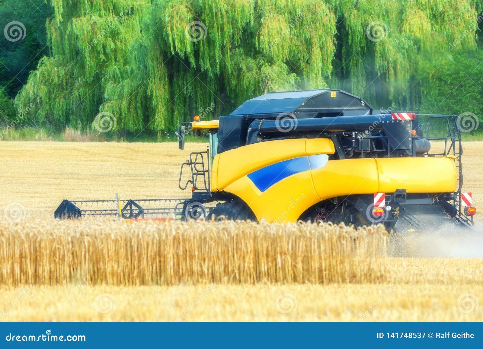 De landbouwer oogst gewassen met a maaidorser