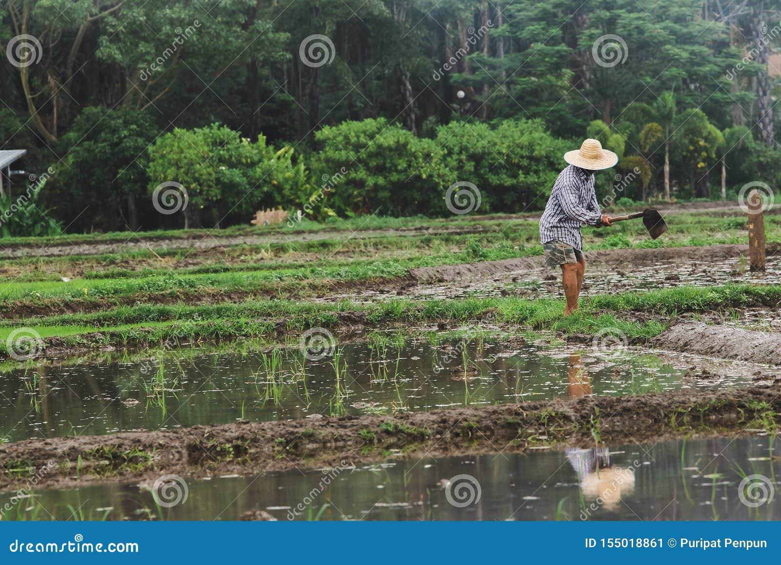 De landbouwers graven de grond