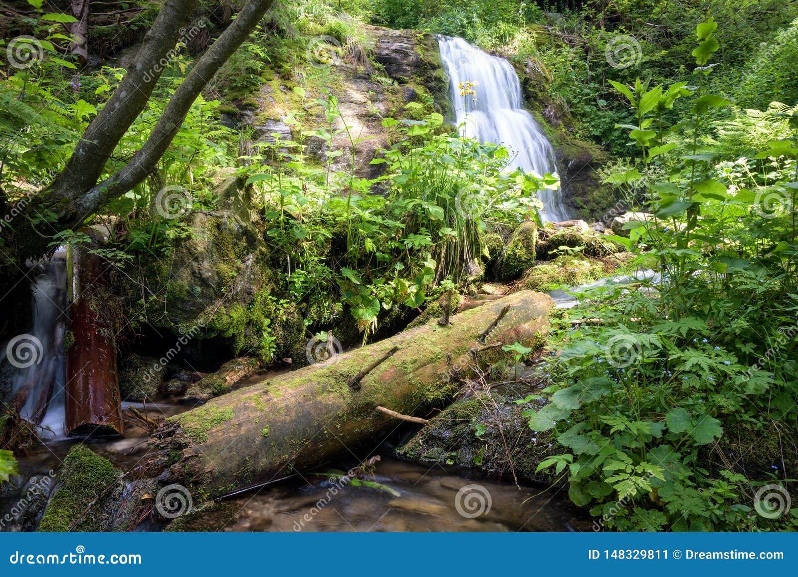De lange waterval van de blootstellingszomer in bos