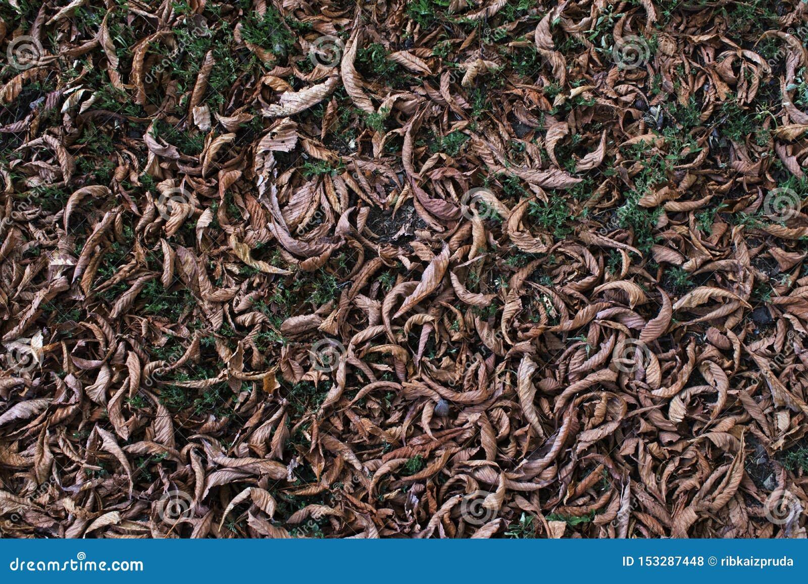 De langzaam verdwenen kastanje gaat ter plaatse weg De achtergrond van het de herfstgebladerte Gefiltreerd beeld