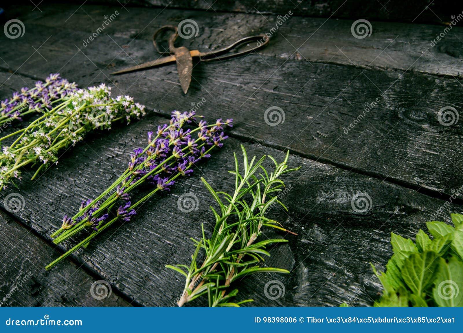 De lavendel bloeit, rozemarijn, munt, thyme, melissa met oude schaar op een zwarte houten lijst Gebrand Hout Kuuroord en schoonhe