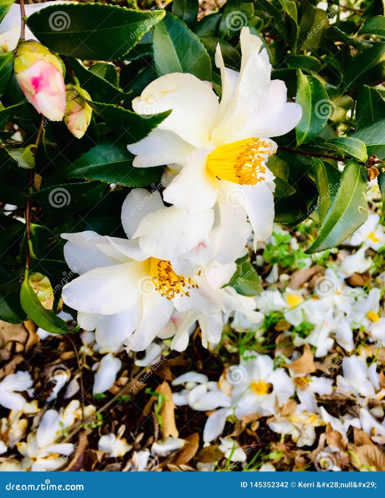 De lente in bloei