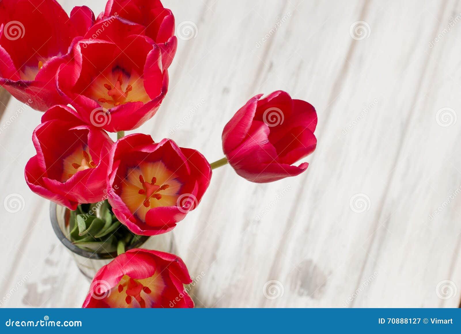 De lente bloeit de rode vaas van tulpenina