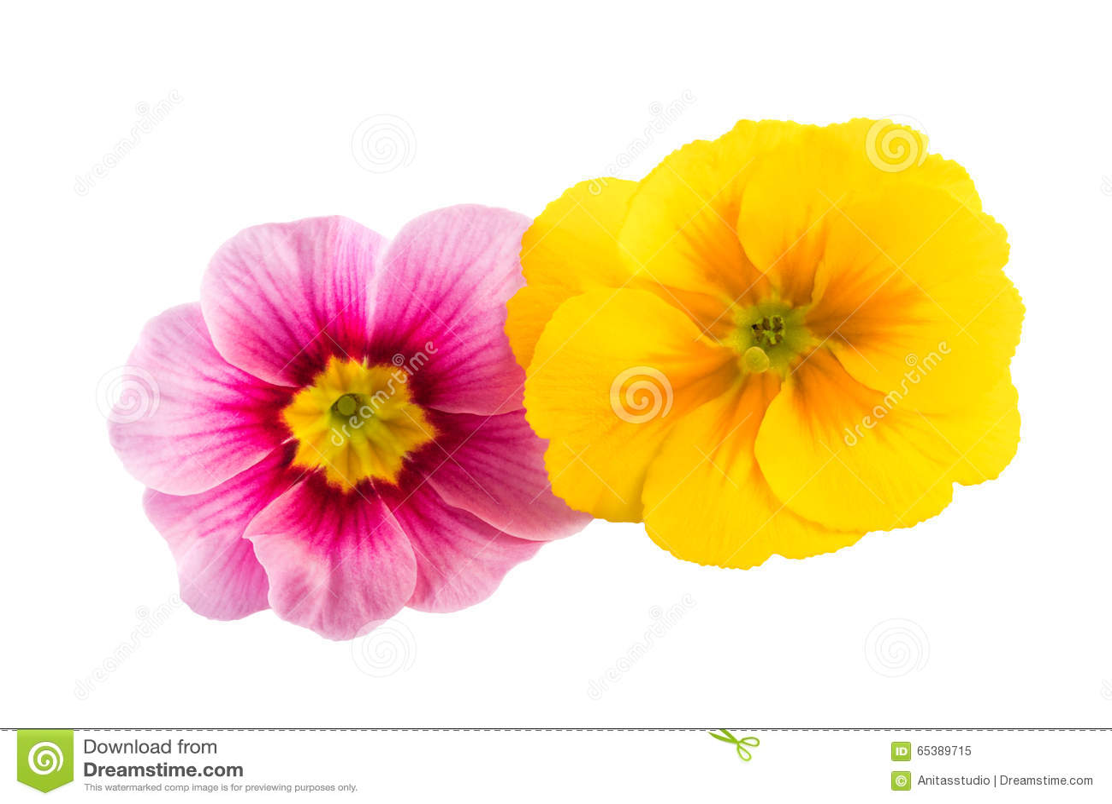 De Lente Bloeit Gele Roze Kleur Stock Foto   Afbeelding  65389715