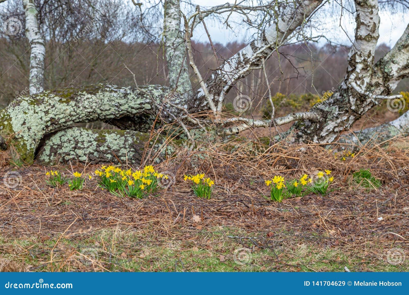 De lente in Chailey Gemeenschappelijk in Sussex