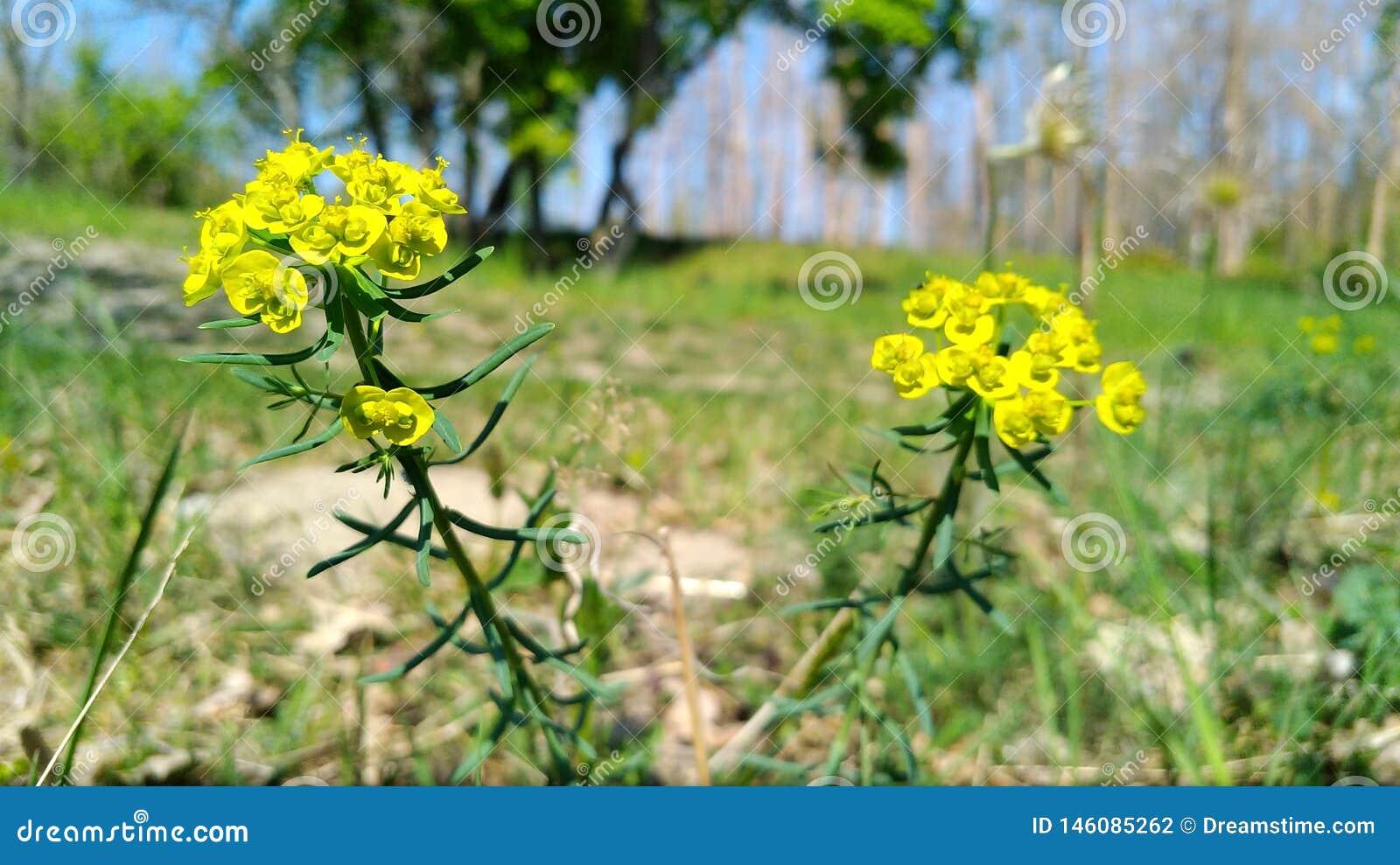 De lente en zijn beste met gele bloem