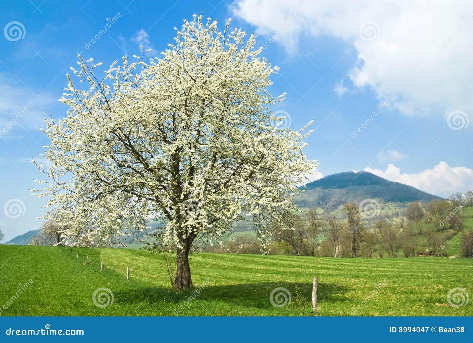 De lente in Frankrijk