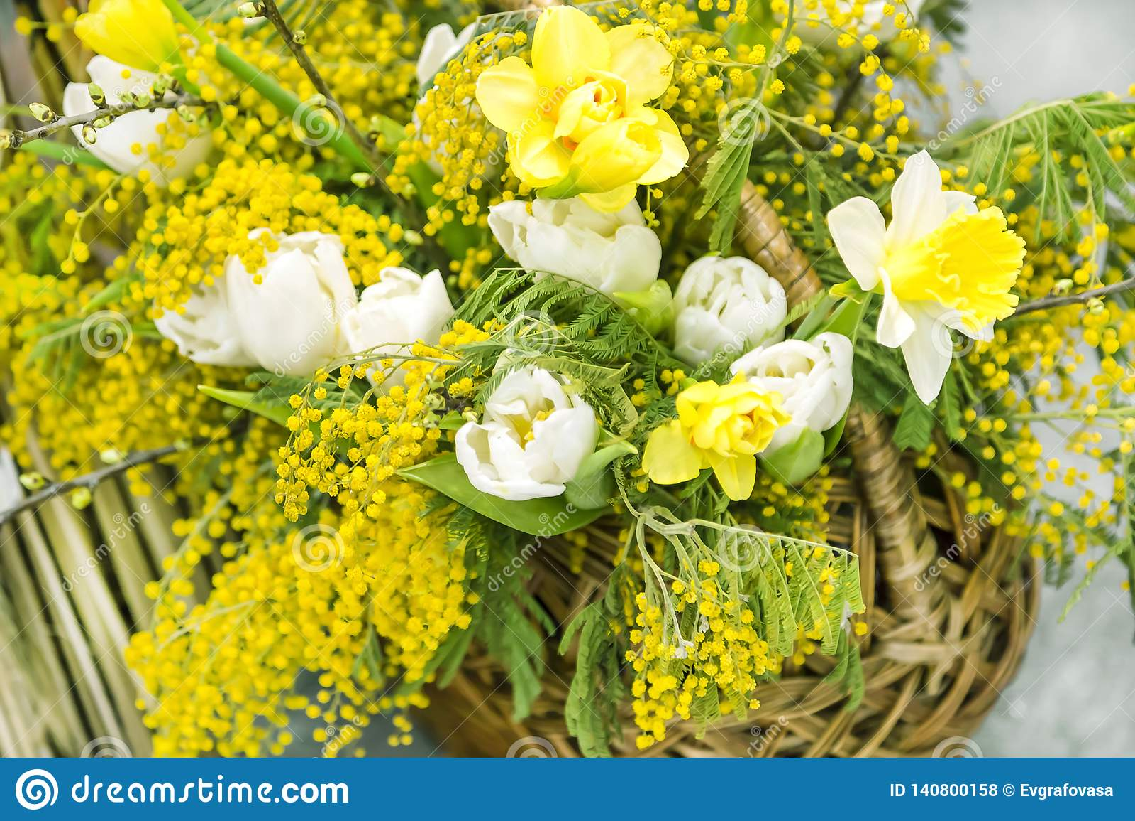 De lente geel boeket in een mand voor de Dag van de Internationale Vrouwen op eigh van Maart van mimosa witte tulpen en gele narc