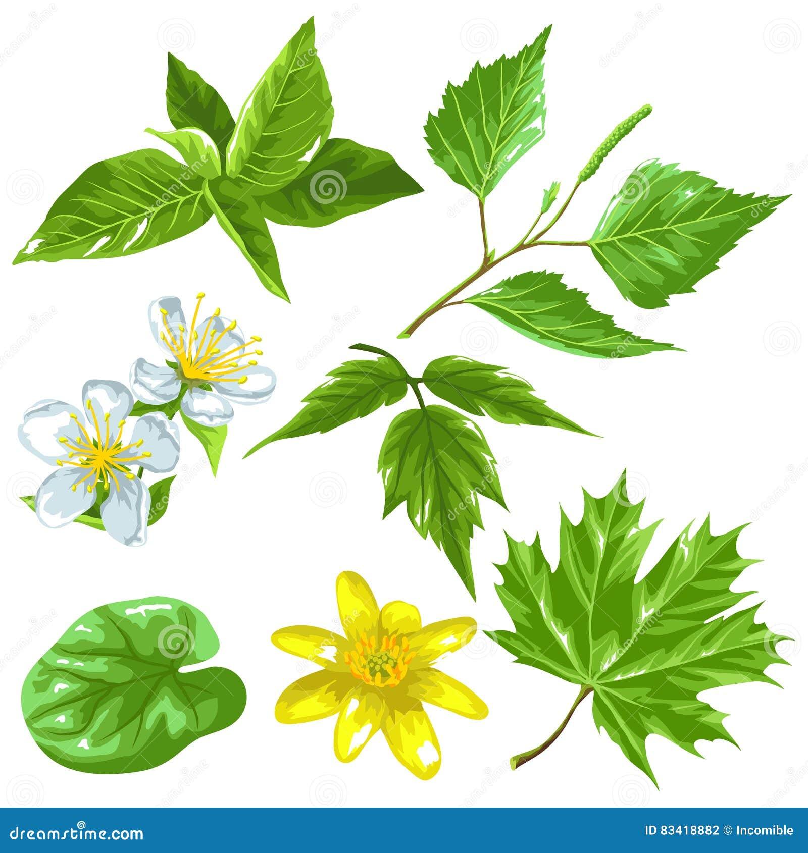 De lente groene bladeren en bloemen Reeks installaties, takje, knop