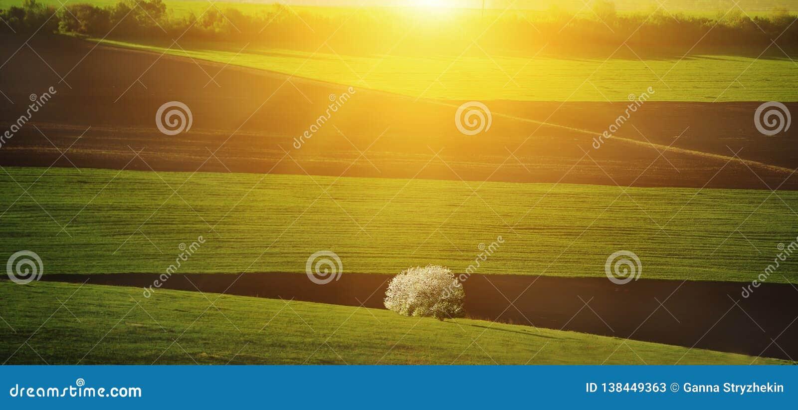 De lente groene heuvelige gebieden en bloeiende boom in het zonlicht Het landschap van de lente