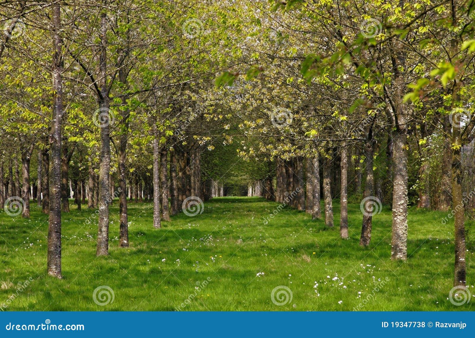 De lente in het bos