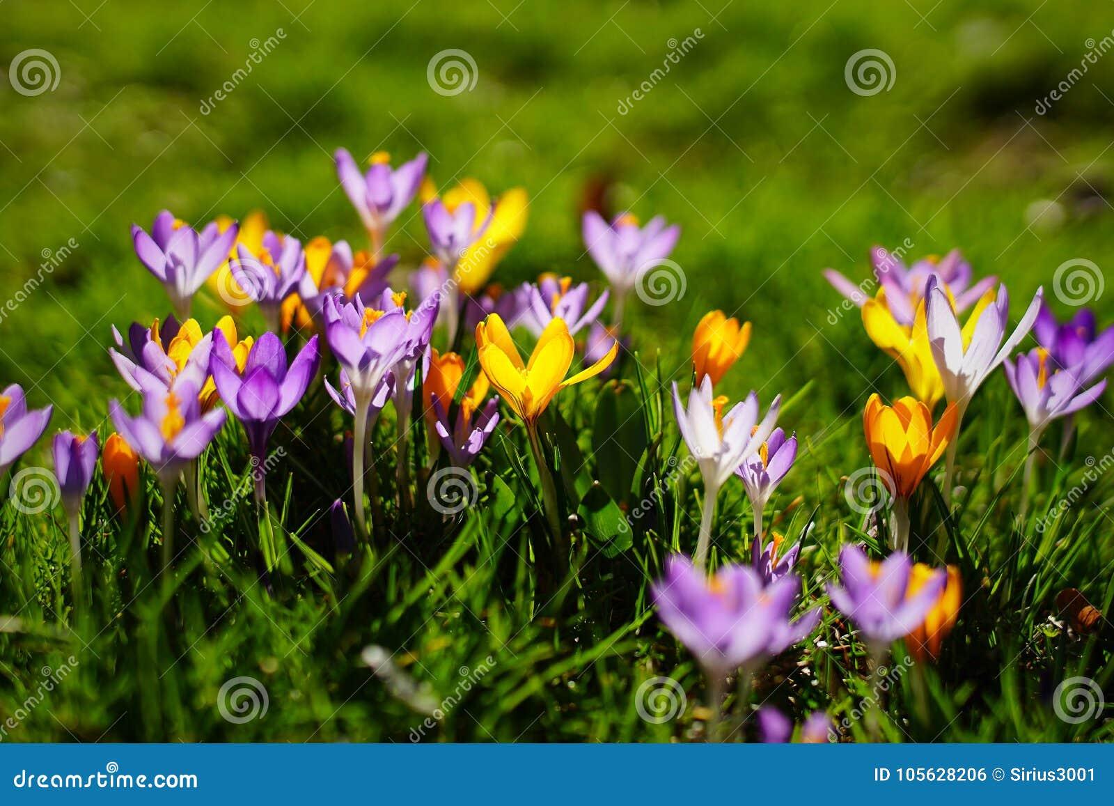 De lente in München II