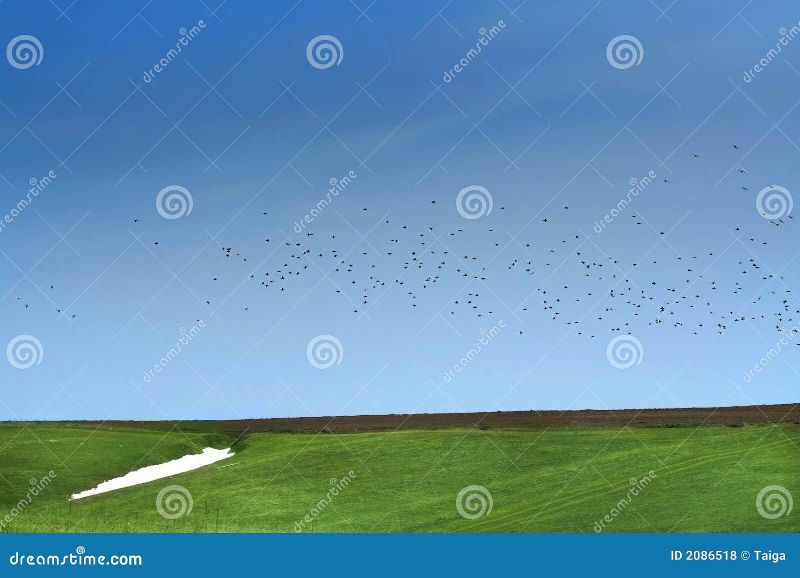 De lente. Sneeuw, groene gras en vogel