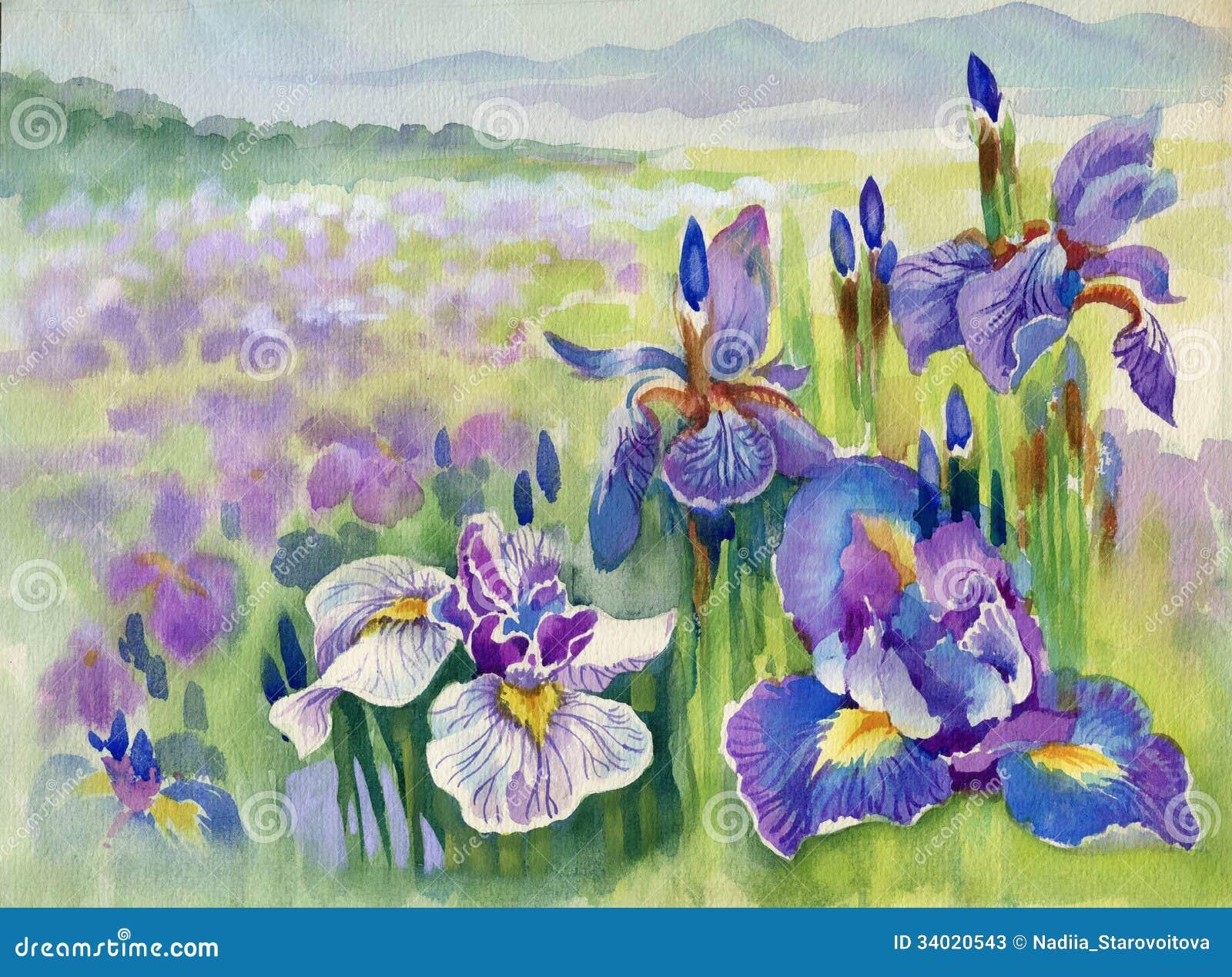 De lente violette bloemen op berg