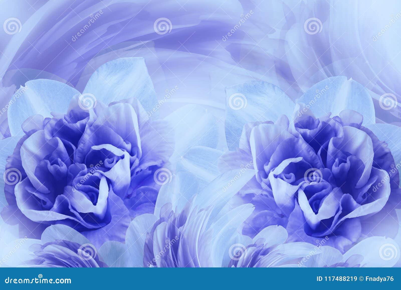 De lenteachtergrond van zacht blauw-violette bloemen van narcissuses Close-up