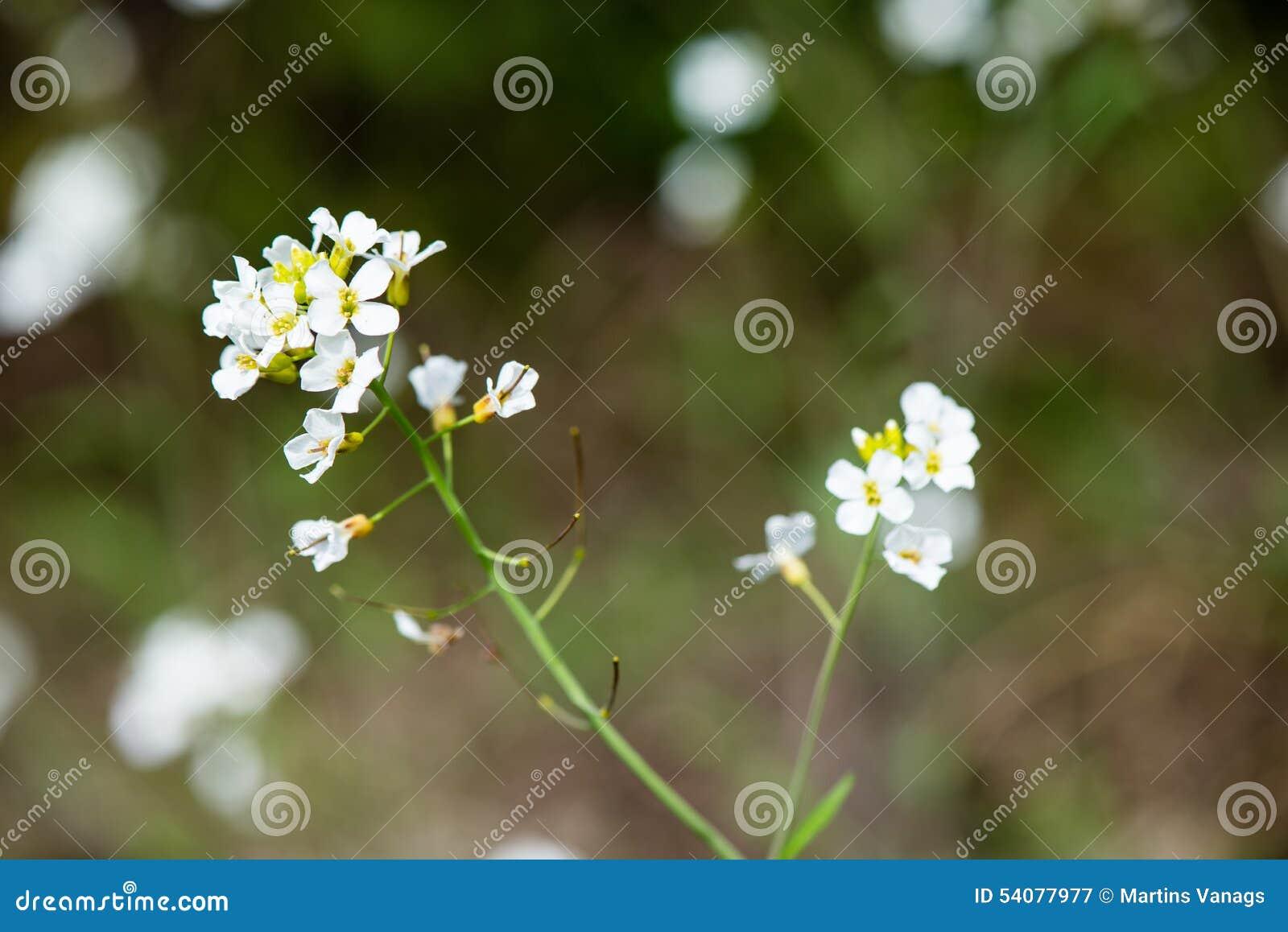 De lentebloemen op groen