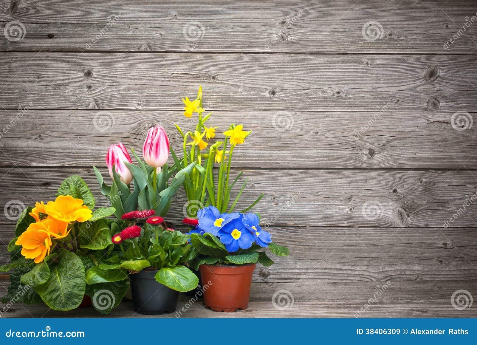 De lentebloemen in potten op houten achtergrond