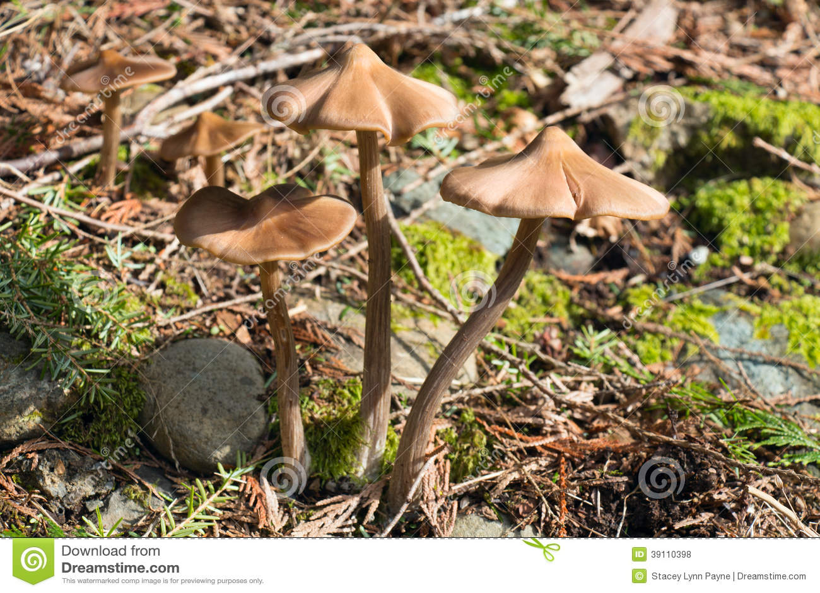 De lentepaddestoelen in het Bos