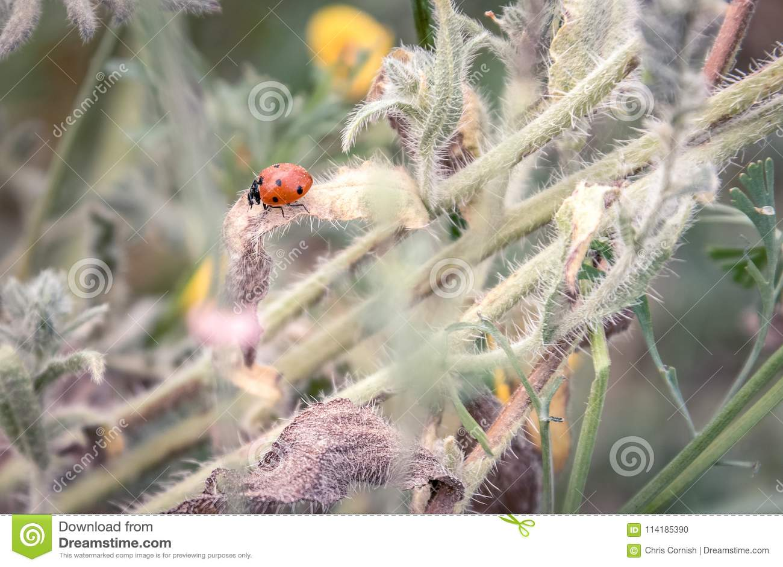 De lentetak met een lieveheersbeestje en de lentebloemen in backgroun