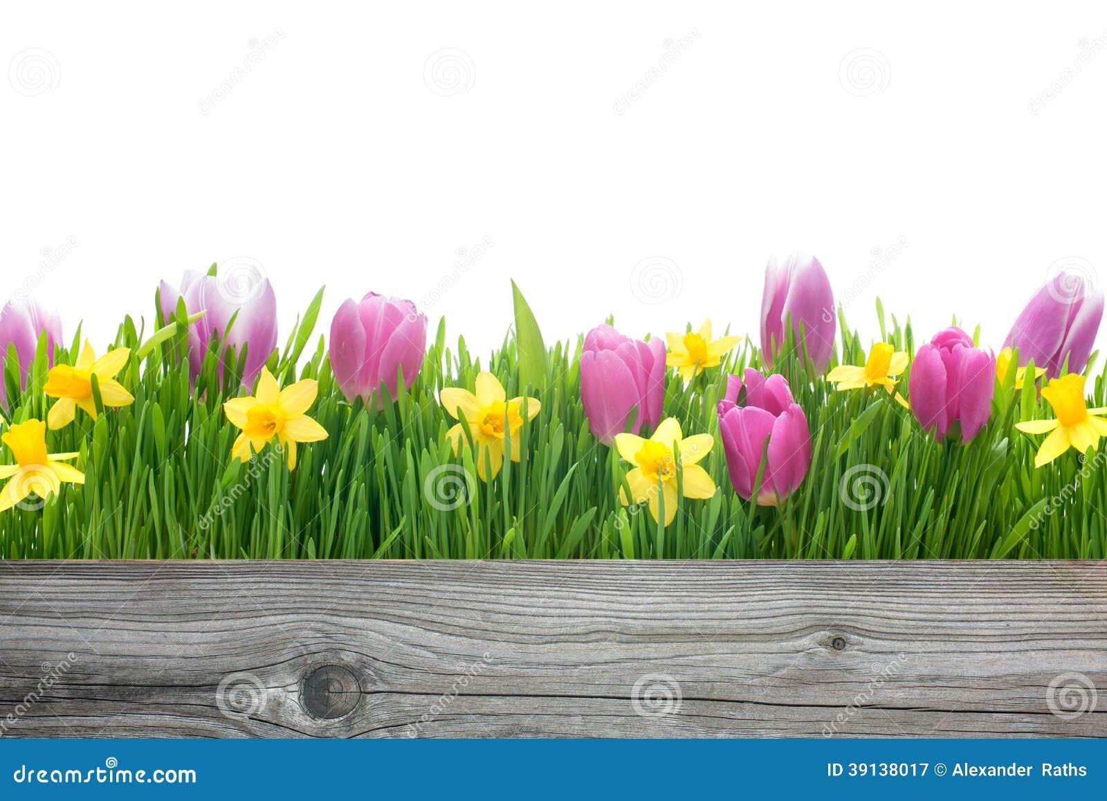 De lentetulpen en gele narcissen